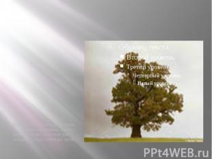 на отдельно стоящем дереве самые густые ветви, как правило, растут с южной сторо