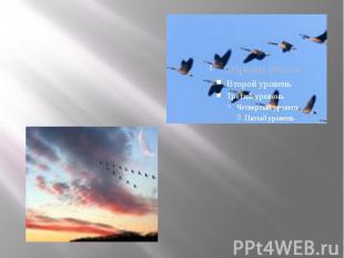 · перелетные птицы весной летят на север, а осенью на юг · перелетные птицы весн