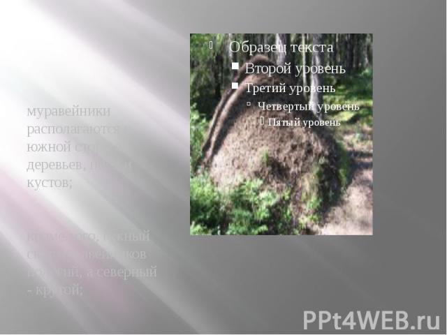 муравейники располагаются с южной стороны деревьев, пней и кустов; муравейники располагаются с южной стороны деревьев, пней и кустов; кроме того, южный скат муравейников пологий, а северный - крутой;
