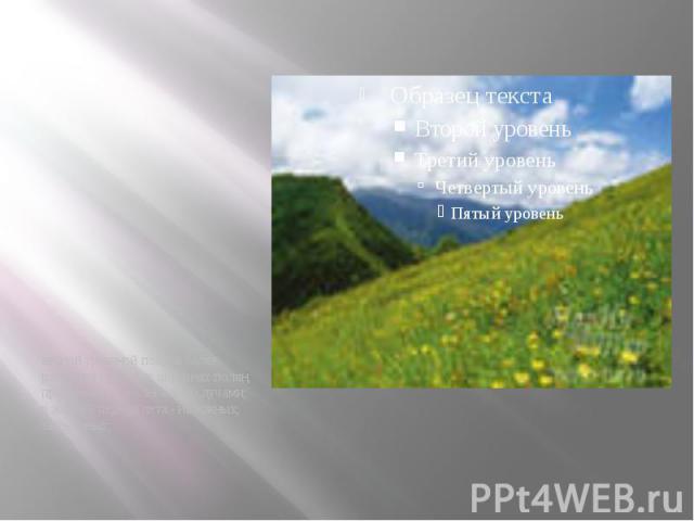 весной травяной покров более развит на северных окраинах полян, прогреваемых солнечными лучами; в жаркий период лета - на южных, затененных; весной травяной покров более развит на северных окраинах полян, прогреваемых солнечными лучами; в жаркий пер…