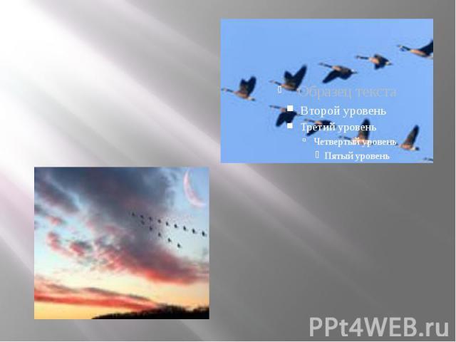 · перелетные птицы весной летят на север, а осенью на юг · перелетные птицы весной летят на север, а осенью на юг