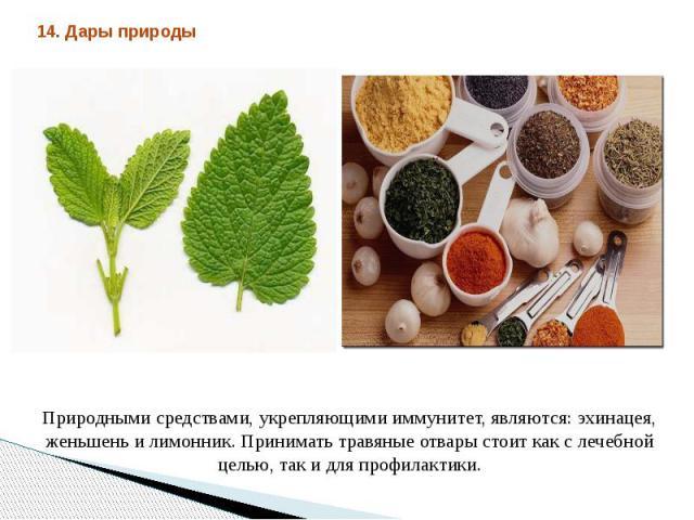 Природными средствами, укрепляющими иммунитет, являются: эхинацея, женьшень и лимонник. Принимать травяные отвары стоит как с лечебной целью, так и для профилактики.
