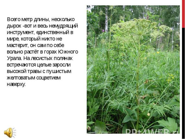 Всего метр длины, несколько дырок -вот и весь немудрящий инструмент, единственный в мире, который никто не мастерит, он сам по себе вольно растёт в горах Южного Урала. На лесистых полянах встречаются целые заросли высокой травы с пушистым желтоватым…
