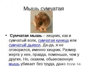 Мышь сумчатая Сумчатая мышь– хищник, как и сумчатый волк,сумча