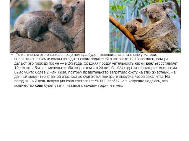 По истечении этого срока он еще полгода будет передвигаться на спине у матери, вцепившись в Самки коалы покидают своих родителей в возрасте 12-18 месяцев, самцы делают это гораздо позже — в 2-3 года. Средняя продолжительность жизникоалыс…