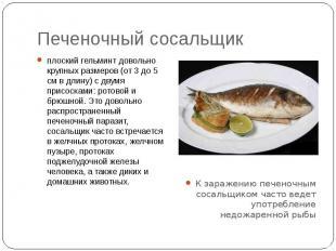 Печеночный сосальщик плоский гельминт довольно крупных размеров (от 3 до 5 см в
