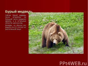 Сейчас бурый медведь почти истреблен на большей части прежнего ареала, а в остал