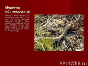 Одна из самых изящных, по-движных и живых змей. Пита-ются ящерицами, мышами, мел