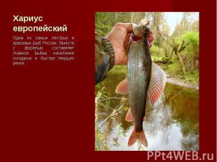 Одна из самых пестрых и красивых рыб России. Вместе с форелью составляет главное
