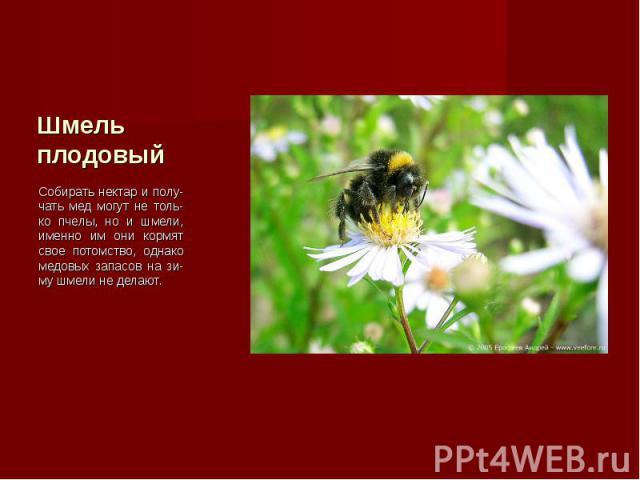 Собирать нектар и полу-чать мед могут не толь-ко пчелы, но и шмели, именно им они кормят свое потомство, однако медовых запасов на зи-му шмели не делают. Собирать нектар и полу-чать мед могут не толь-ко пчелы, но и шмели, именно им они кормят свое п…