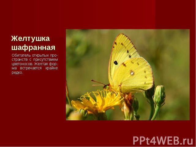 Обитатель открытых про-странств с присутствием цветоносов. Желтая фор-ма встречается крайне редко. Обитатель открытых про-странств с присутствием цветоносов. Желтая фор-ма встречается крайне редко.