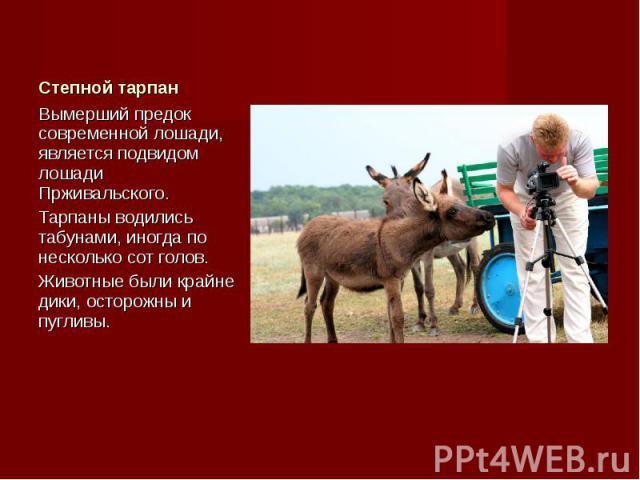 Вымерший предок современной лошади, является подвидом лошади Прживальского. Вымерший предок современной лошади, является подвидом лошади Прживальского. Тарпаны водились табунами, иногда по несколько сот голов. Животные были крайне дики, осторожны и …