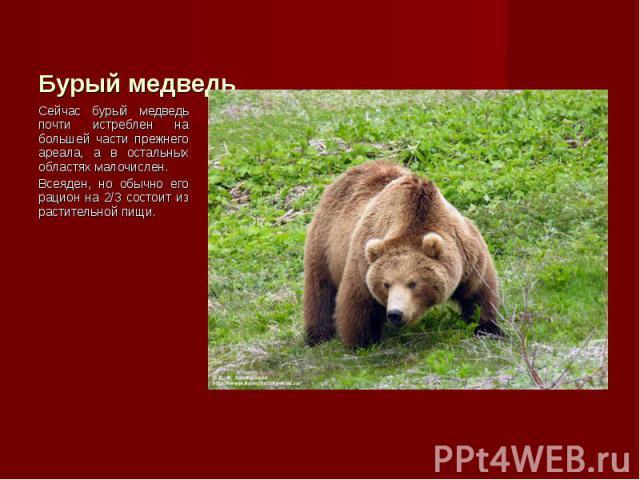 Сейчас бурый медведь почти истреблен на большей части прежнего ареала, а в остальных областях малочислен. Сейчас бурый медведь почти истреблен на большей части прежнего ареала, а в остальных областях малочислен. Всеяден, но обычно его рацион на 2/3 …