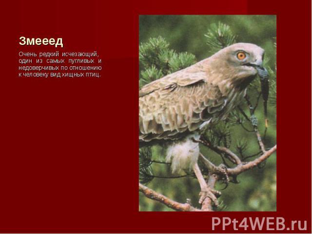 Очень редкий исчезающий, один из самых пугливых и недоверчивых по отношению к человеку вид хищных птиц. Очень редкий исчезающий, один из самых пугливых и недоверчивых по отношению к человеку вид хищных птиц.