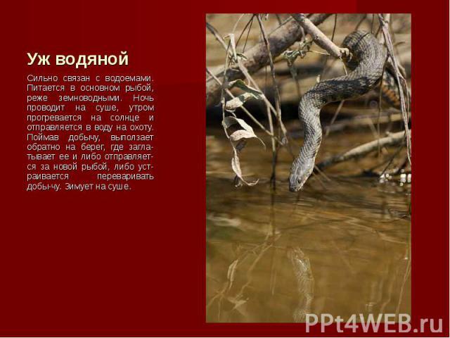 Сильно связан с водоемами. Питается в основном рыбой, реже земноводными. Ночь проводит на суше, утром прогревается на солнце и отправляется в воду на охоту. Поймав добычу, выползает обратно на берег, где загла-тывает ее и либо отправляет-ся за новой…