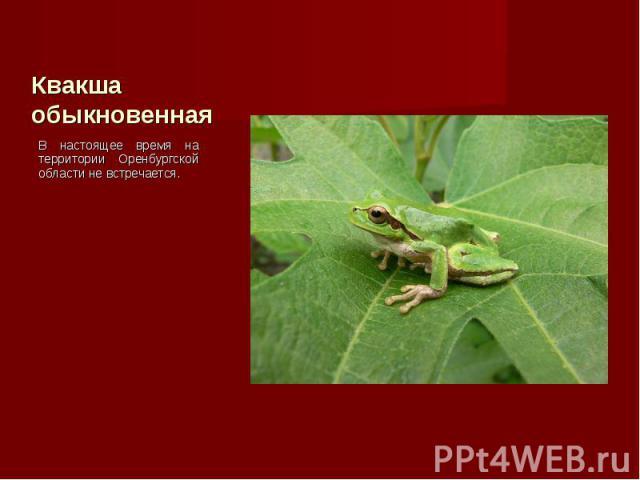В настоящее время на территории Оренбургской области не встречается. В настоящее время на территории Оренбургской области не встречается.