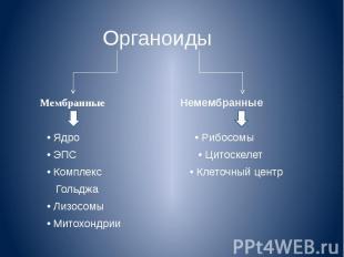 Органоиды Мембранные Немембранные • Ядро • Рибосомы • ЭПС • Цитоскелет • Комплек