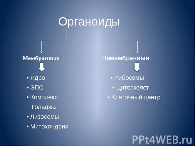 Органоиды Мембранные Немембранные • Ядро • Рибосомы • ЭПС • Цитоскелет • Комплекс • Клеточный центр Гольджа • Лизосомы • Митохондрии