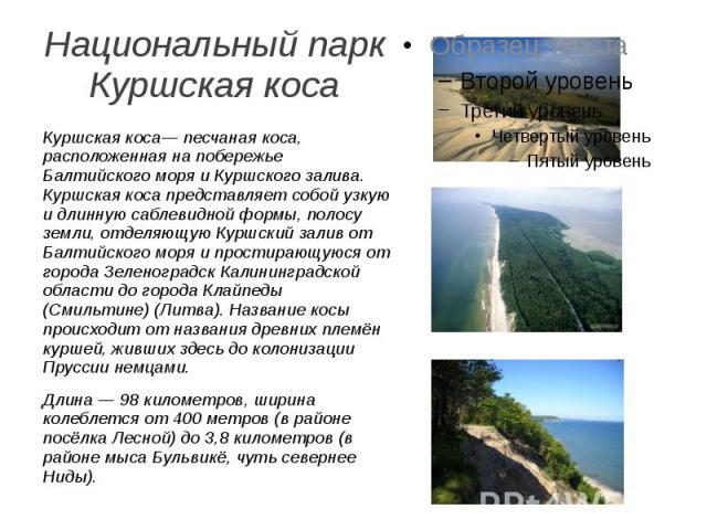 Национальный парк Куршская коса. Куршская коса— песчаная коса, расположенная на побережье Балтийского моря и Куршского залива. Куршская коса представляет собой узкую и длинную саблевидной формы, полосу земли, отделяющую Куршский залив от Балтийского…