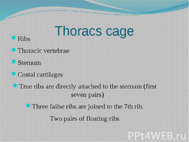 Thoracs cage Ribs Thoracic vertebrae Sternum Costal cartilages True ribs are directly attached to the sternum (first seven pairs) Three failse ribs are joined to the 7th rib. Two pairs of floating ribs