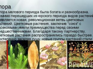 Флора Флорамелового периодабыла богата и разнообразна. Помимо переше