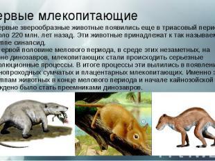 Первые млекопитающие Первые зверообразные животные появились еще в триасов
