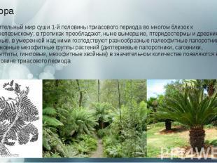 Флора Растительный мир суши 1-й половинытриасового периодаво многом
