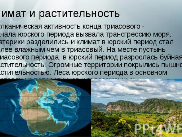 Климат и растительность Вулканическая активность конца триасового - началаюрского периода вызвала трансгрессию моря. Материки разделились и климат вюрский период стал более влажным чем в триасовый. На месте пустынь триасового периода, в …