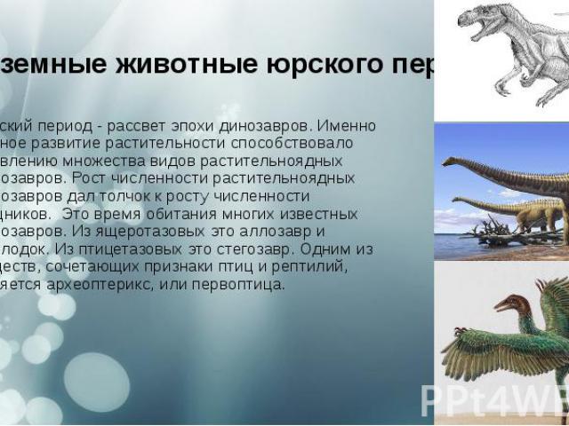 Наземные животныеюрского периода Юрский период- рассвет эпохи динозавров. Именно буйное развитие растительности способствовало появлению множества видов растительноядных динозавров. Рост численности растительноядных динозавров дал толчок…