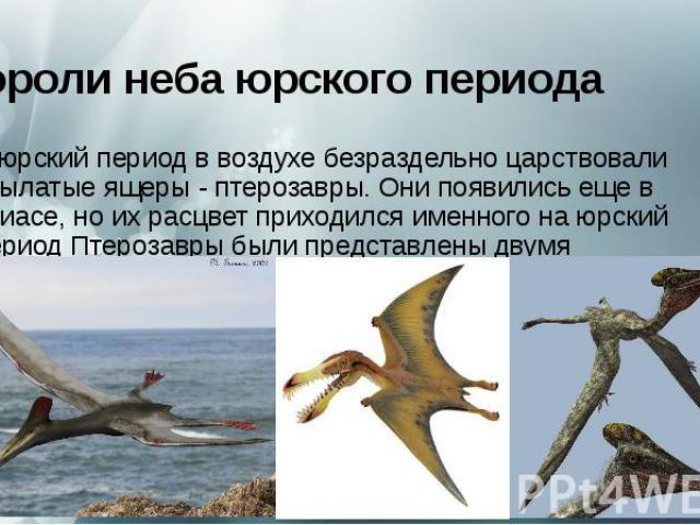 Короли неба юрского периода Вюрский периодв воздухе безраздельно царствовали крылатые ящеры - птерозавры. Они появились еще в триасе, но их расцвет приходился именного на юрский периодПтерозавры были представлены двумя группами&nbs…
