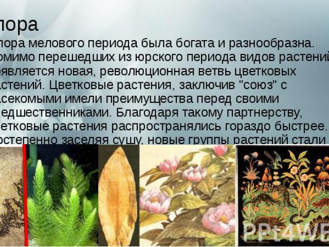 """Флора Флорамелового периодабыла богата и разнообразна. Помимо перешедших из юрского периода видов растений, появляется новая, революционная ветвь цветковых растений. Цветковые растения, заключив """"союз"""" с насекомыми имели преиму…"""