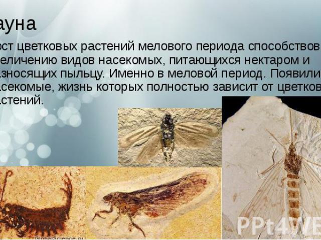 Фауна Рост цветковых растениймелового периодаспособствовал увеличению видов насекомых, питающихся нектаром и разносящих пыльцу. Именно в меловой период.Появились насекомые, жизнь которых полностью зависит от цветковых растений.