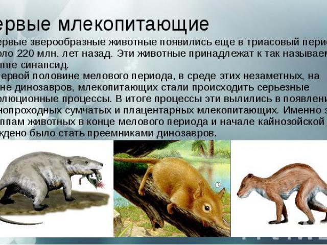 Первые млекопитающие Первые зверообразные животные появились еще в триасовый период, около 220 млн. лет назад. Эти животные принадлежат к так называемой группе синапсид. В первой половинемелового периода, в среде этих незаметных, на фоне…