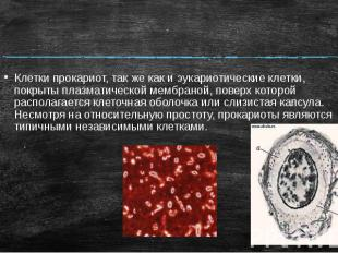 Клетки прокариот, так же как и эукариотические клетки, покрыты плазматической ме