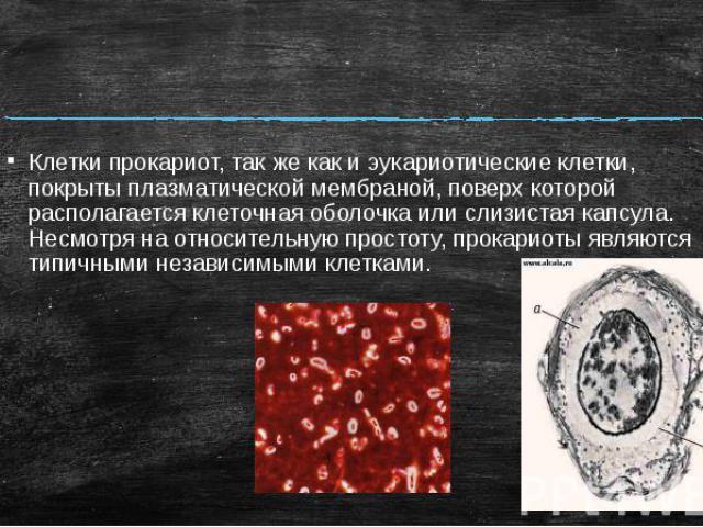 Клетки прокариот, так же как и эукариотические клетки, покрыты плазматической мембраной, поверх которой располагается клеточная оболочка или слизистая капсула. Несмотря на относительную простоту, прокариоты являются типичными независимыми клетками.