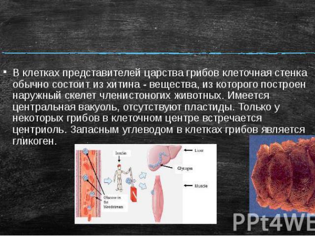 В клетках представителей царства грибов клеточная стенка обычно состоит из хитина - вещества, из которого построен наружный скелет членистоногих животных. Имеется центральная вакуоль, отсутствуют пластиды. Только у некоторых грибов в клеточном центр…