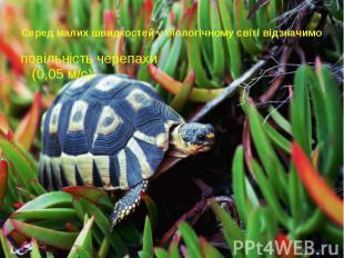 Серед малих швидкостей у біологічному світі відзначимо повільність черепахи (0,0