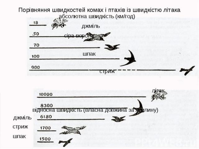 Порівняння швидкостей комах і птахів із швидкістю літака абсолютна швидкість (км/год) джміль сіра ворона шпак стриж літак відносна швидкість (власна довжина за хвилину) джміль стриж шпак сіра ворона літак
