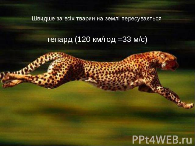 Швидше за всіх тварин на землі пересувається гепард (120 км/год =33 м/с)