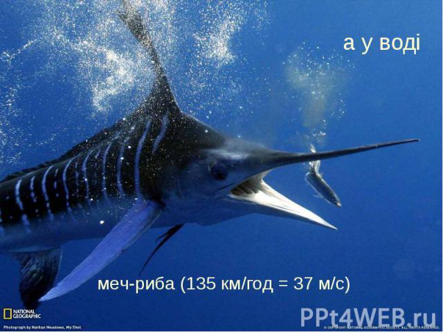 а у воді меч-риба (135 км/год = 37 м/с)