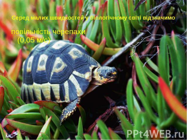 Серед малих швидкостей у біологічному світі відзначимо повільність черепахи (0,05 м/с)