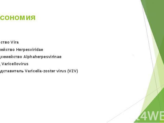Царство Vira Царство Vira Семейство Herpesviridae Подсемейство Alphaherpesvirinae Род Varicellovirus Представитель Varicella-zoster virus (VZV)