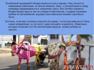 Необычной традицией в Индии является культ коровы. Она считается священным живот