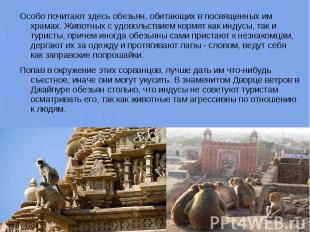 Особо почитают здесь обезьян, обитающих в посвященных им храмах. Животных с удов