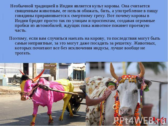 Необычной традицией в Индии является культ коровы. Она считается священным животным, ее нельзя обижать, бить, а употребление в пищу говядины приравнивается к смертному греху. Вот почему коровы в Индии бродят просто так по улицам и проспектам, создав…