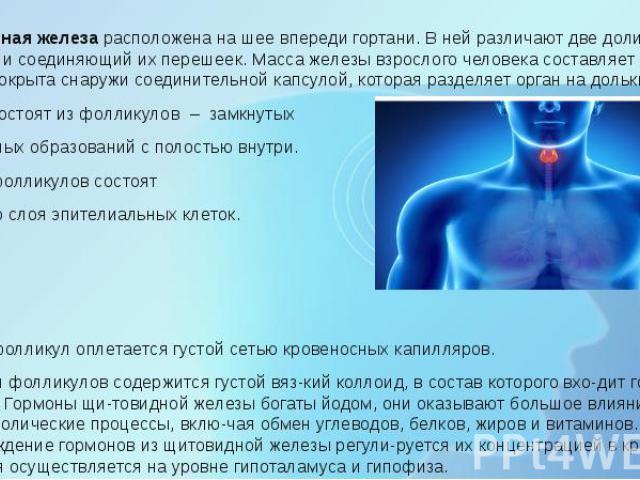 Щитовидная железарасположена на шее впереди гортани. В ней различают две доли (правую и левую) и соединяющий их перешеек. Масса железы взрослого человека составляет 20 – 30 г. Железа покрыта снаружи соединительной капсулой, которая раздел…