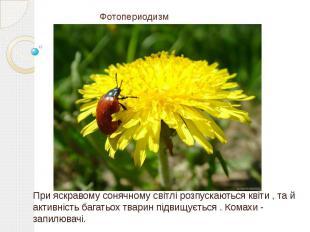 Фотопериодизм При яскравому сонячному світлі розпускаються квіти , та й активніс