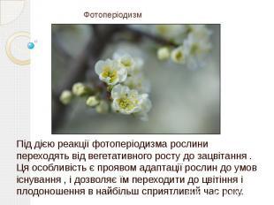 Фотоперіодизм Під дією реакції фотоперіодизма рослини переходять від вегетативно