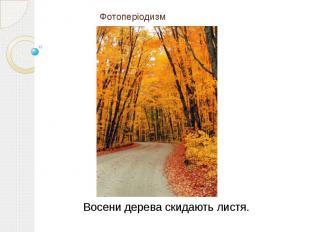 Фотоперіодизм Восени дерева скидають листя.