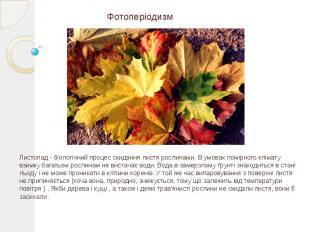 Фотоперіодизм Листопад - біологічний процес скидання листя рослинами. В умовах п